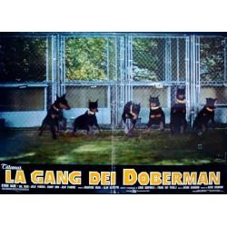 Doberman Gang (Fotobusta)